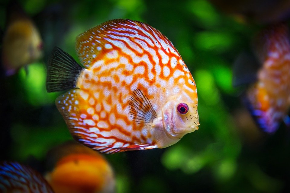 'Bubbles – the Jumpy Fish Who Learns How to Relax'.