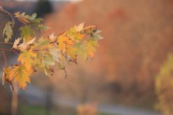 hww-fall-leaves