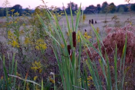 hww-meadow-flowers
