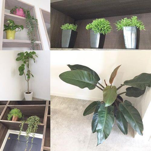 HEARTYのグリーンな植物達お客様にリラックスして頂けるように空気を綺麗にする効果のある植物を置いています!店内の至る所に置いてあるので見つけてみてください