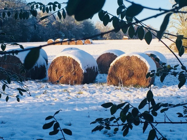 Snow Covered Hay Bales
