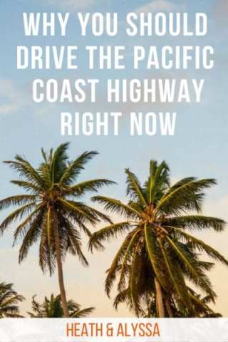 Beaches, wildlife, forests, stunning views. Here's why driving the Pacific Coast Highway will make this the best summer ever.