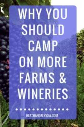 camp on wineries