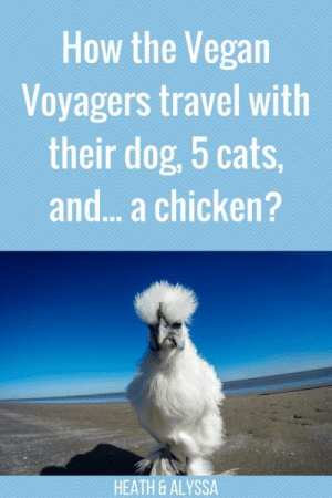 How the Vegan Voyagers Travel With Their Dog, 5 Cats, and...a Chicken?