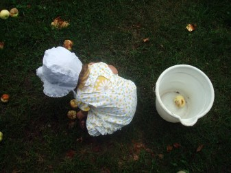 Picking up apples is a perfect activity for a toddler.
