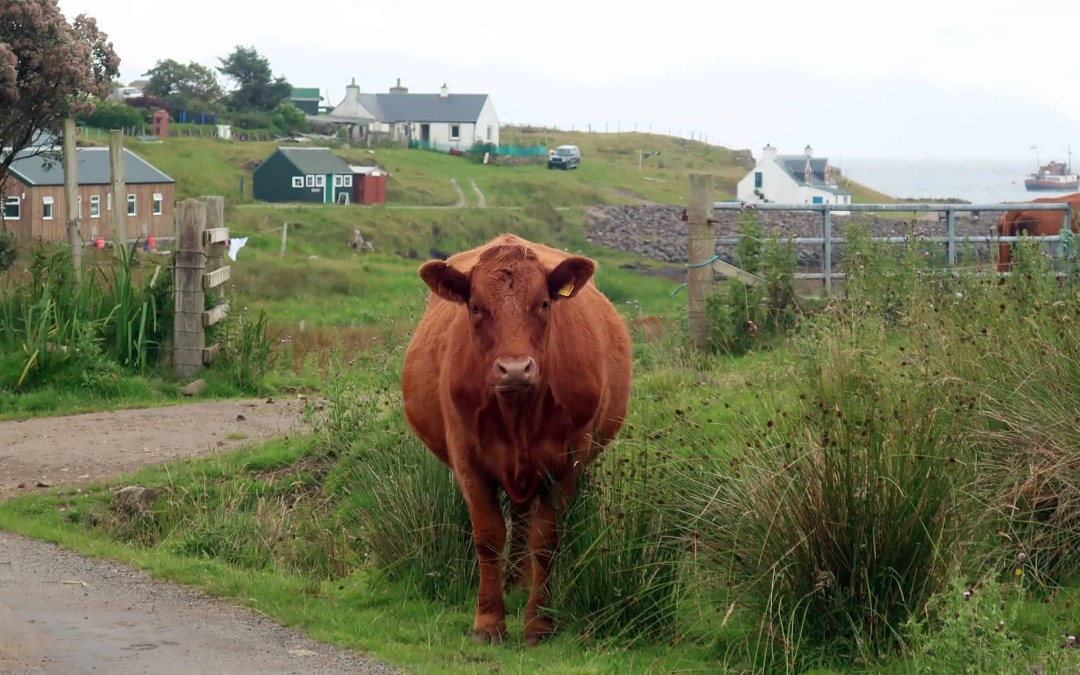The Isle of Muck – Finding a Remote Paradise on Earth