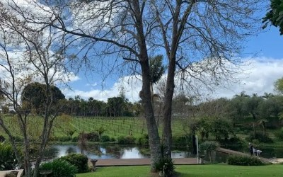 New Zealand Wine – A Day On The Northland Wine Trail