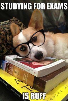 studying 1