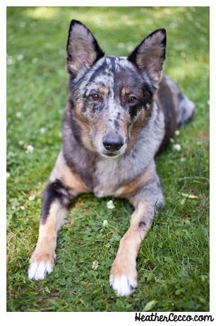 dog-pet-photography-spca-2-2
