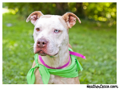 dog-pet-photography-spca-2