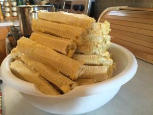 cobs after corn has been cut off.