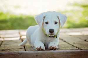 turmeric for your dog