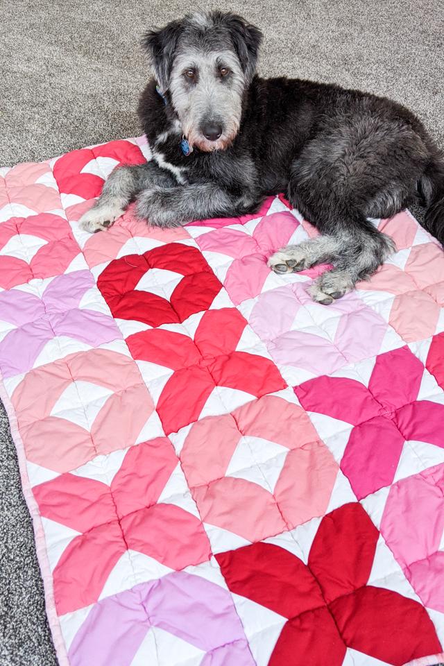 puppy on valentine quilt