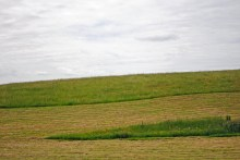 Day 1 Fields near Cricklade