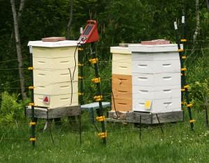Heathers harvest hives
