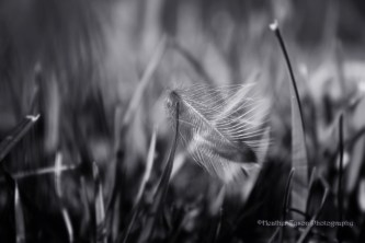 Feather3BW1