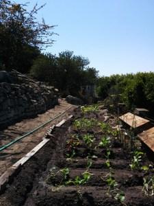 Labor Day 2014 in the Garden