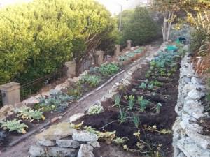 1006 garden 10 inch 72 dpi