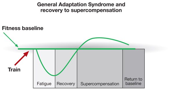 Image result for adaptation syndrome