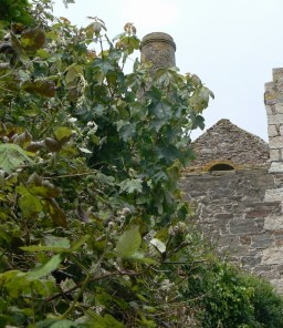 derelict mines dotted around St Agnes4