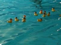 Plastic ducks at the swimming pool