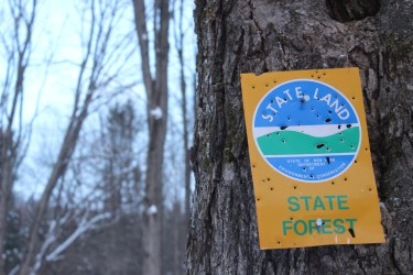 State Forest Sign
