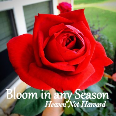 Bloom in Any Season