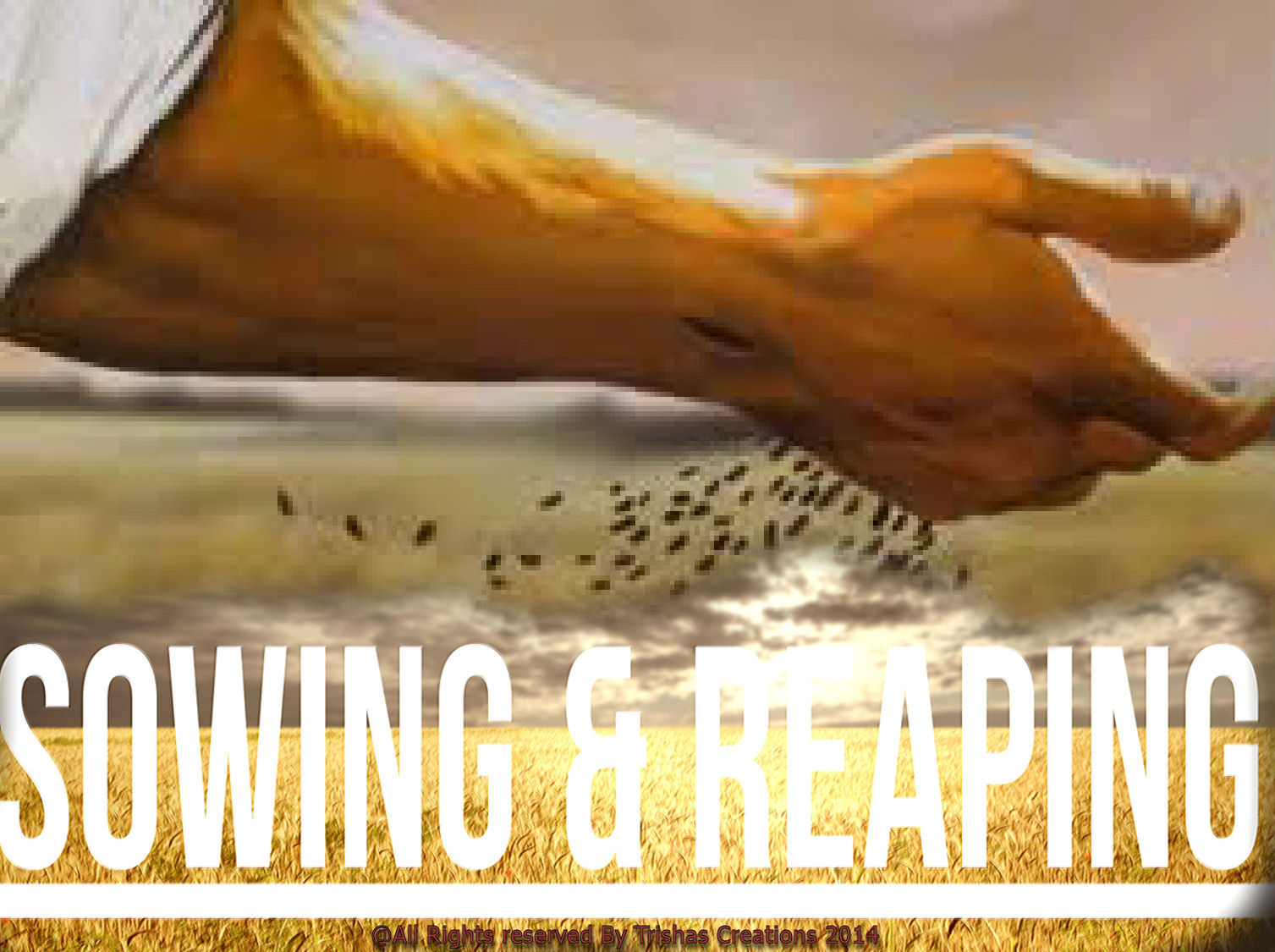 Image result for reaping what you sow
