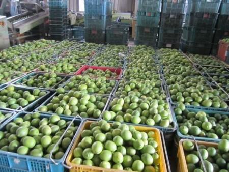 jade lemon crates