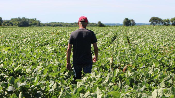 china tariff soybean