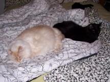 Sophie and Atticus