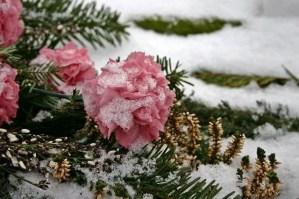 פרחי לוויה