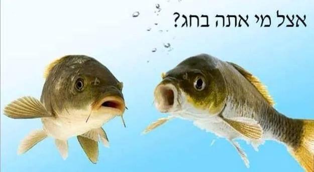 דג גפילטע פיש