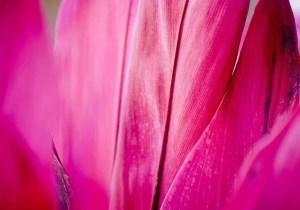 פרח אבסטרקט