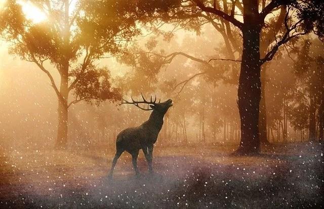 צבי אייל והקרן אור ביער
