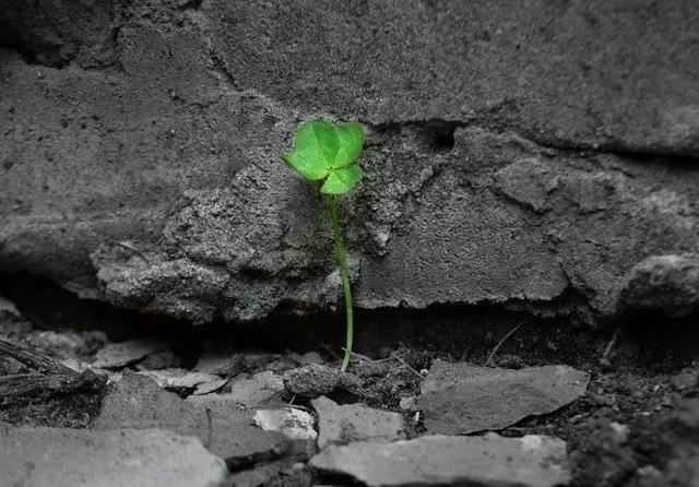 שתיל צמח ירוק