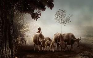 רועה בקר