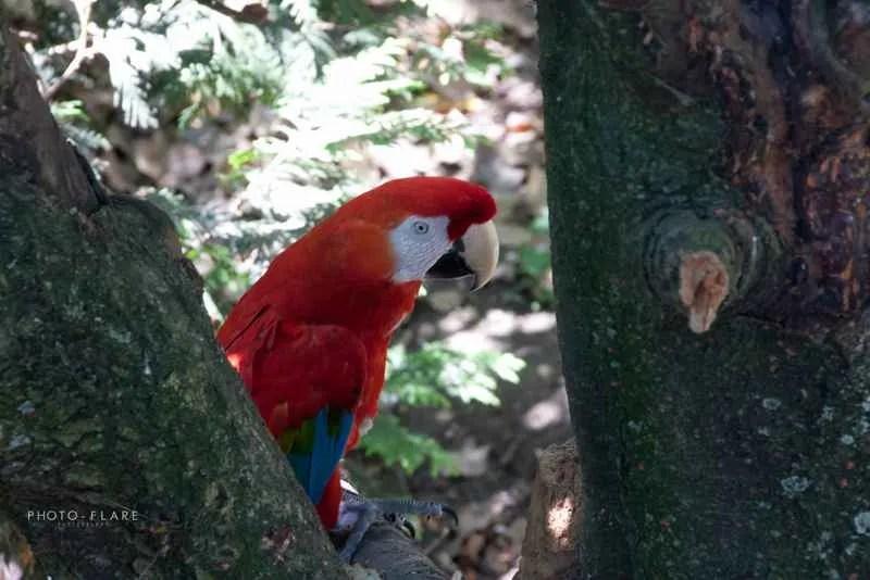 תוכי בגן החיות בקווינס