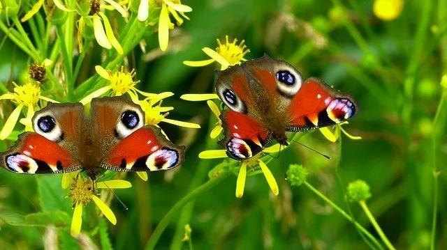 פרפר צבעוני על פרח שותה צוף