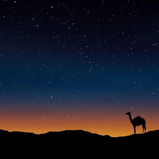 גמל לאור הכוכבים