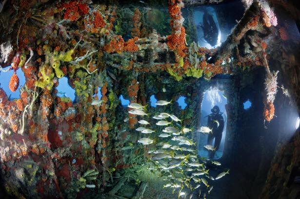 שונית אלמוגים