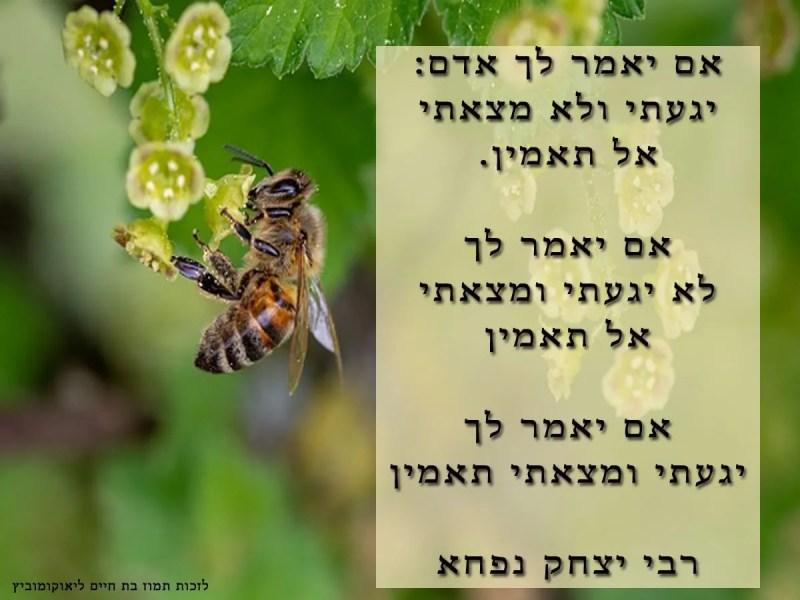 רבי-יצחק-בן-נפחא-ויגעת-ומצאת-תאמין