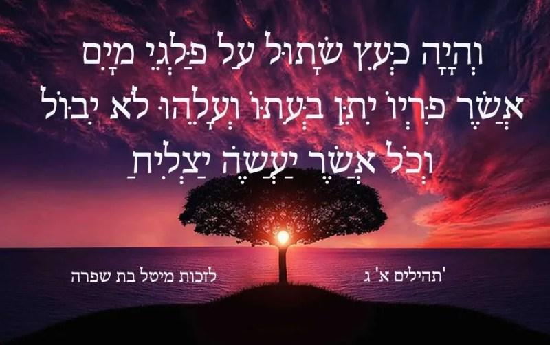 וְהָיָה כְּעֵץ שָׁתוּל עַל פַּלְגֵי מָיִם אֲשֶׁר פִּרְיוֹ יִתֵּן בְּעִתּוֹ וְעָלֵהוּ לֹא יִבּוֹל וְכֹל אֲשֶׁר יַעֲשֶׂה יַצְלִיחַ  'תהילים א' ג
