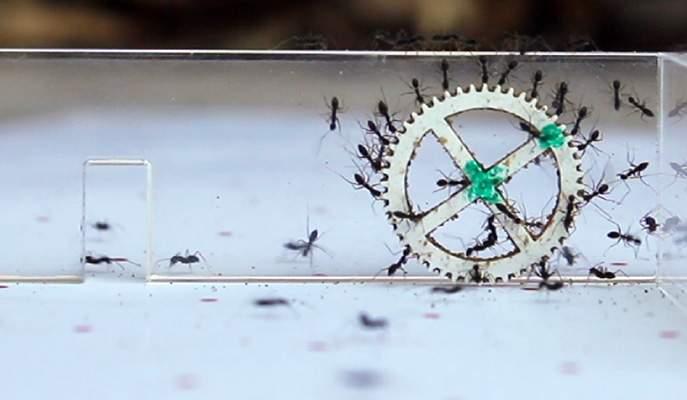 אתגר הפתח הצר: האם יצליחו הנמלים להעביר את המטען בשלום?