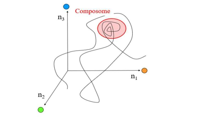 """תצוגה מופשטת של """"עולם הליפידים"""". כל נקודה על הקו מייצגת הרכב כימי מסוים בציר הזמן, בעוד שלוש הקואורדינטות מייצגות כמויות של שלושה סוגי מולקולות. ה""""קומפוזום"""" (מסומן בוורוד) מהווה את מרווח הזמן שבו ההרכב הכימי נשאר כמעט ללא שינוי, ובכך מייצג שכפול הרכבי"""