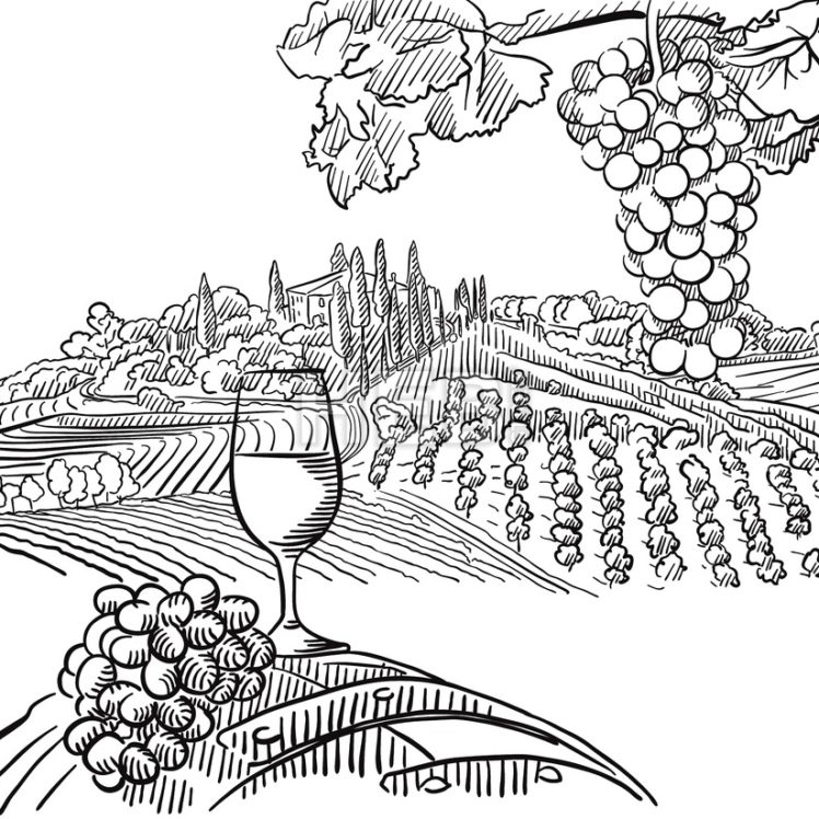 Vineyard Composition with Grapes and Glass of Vine