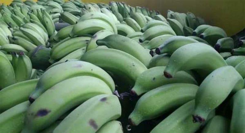 plátanos verdes para diarrea
