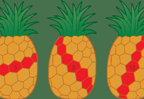 """Résultat de recherche d'images pour """"fibonacci patterns pineapple"""""""