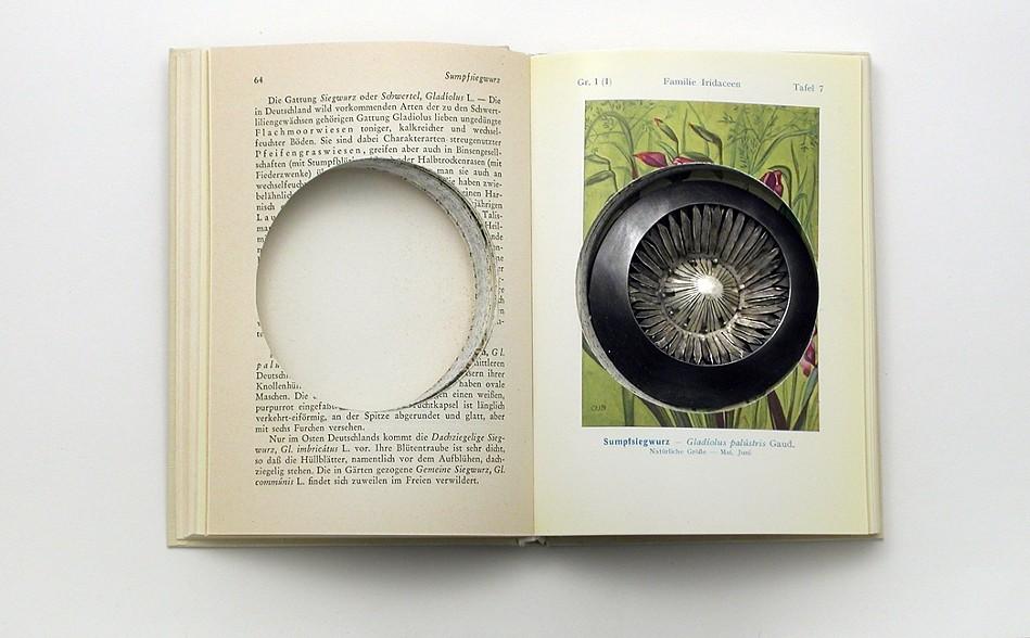 Sondra Sherman, Geschutzte Pflanzen, 2010-2020, papier