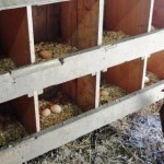 All Things Eggs! Part 3 – Selling.